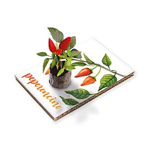 Cartolina Vivente, Seme Peperoncino