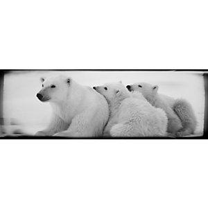 CEANOTHE Quadro decorativo, Orso Bianco, 97 x 30 cm