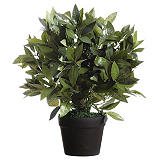 Paperflow Planta artificial Laurel, 50 cm