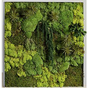 Tableau végétal de décoration - Mousse de Finlande stabilisée et 100% naturelle - Cadre carré blanc
